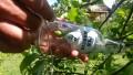 owoc w butelce.jpg