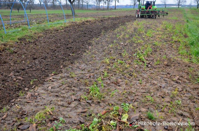 przygotowanie gleby pod winnicę