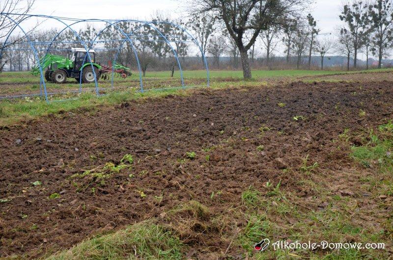 przygotowanie gleby pod winnicę 4