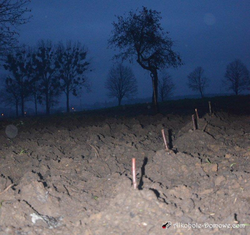 sadzenie winorośli - kopczyki