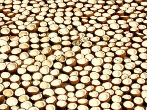 Nalewka na wiórkach kokosowych - Kokosówka