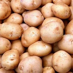 Zacier z ziemniak�w
