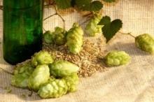 Produkcja piwa domowego dla pocz�tkuj�cych