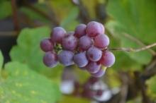 Zabawa fotograficzna: Kolory jesieni z domowym trunkiem w tle!